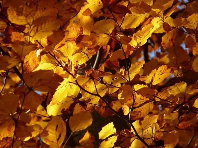 秋季养生祝福短信内容有哪些介绍秋季养生需要注意的知识