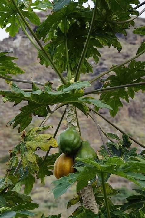 直肠炎能吃丝瓜吗直肠炎怎么防止才好呢